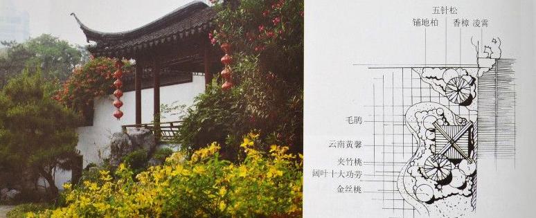 园林设计实例:植物配置平面图与实景对照