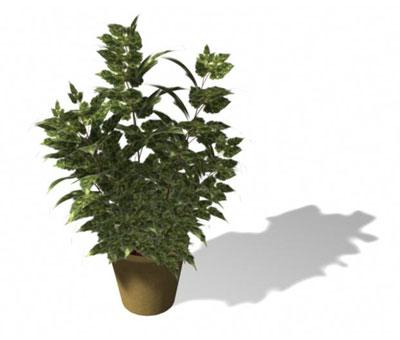 标签:盆栽绿色植物花卉 素材分类: 素材首页 - 模型 - 动物植物 版权